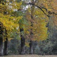 Осень :: Наталья Бабич