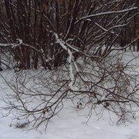 После Рождества снова серо :: Андрей Лукьянов