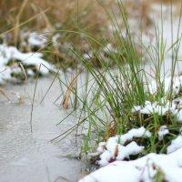 Снежный пух :: Павел Джос