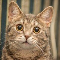 Кошка Дуся :: Павел Москалёв