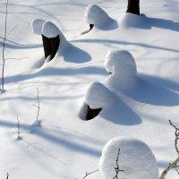 снежные грибки :: Александр Прокудин