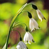 Мелодия весны :: Alexander Andronik