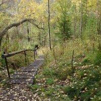 Осенние прогулки. :: Елена