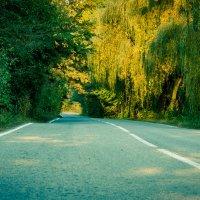 Дорога в лесу :: Сергей Руденко