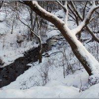 Вот,где утки зимуют! :: Роланд Дубровский