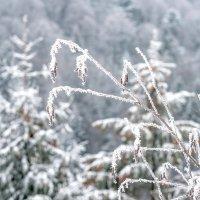 Зима в горах :: Сергей Форос