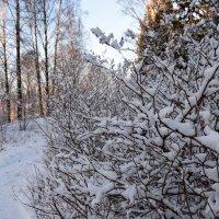 Текстура зимы :: Дмитрий Синявский