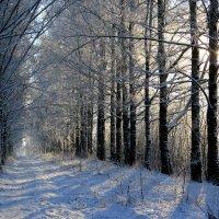Снежный январь :: Наталья Лунева