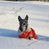 снежная Шери :: Седа Ковтун