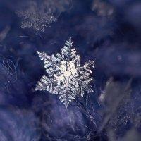 снежинка :: Седа Ковтун