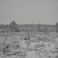Зимнее поле :: Алёна Бадьина