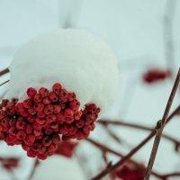 Зимняя ягодка! :: Борис Кононов