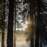 В лесу. :: Андрей Боталов