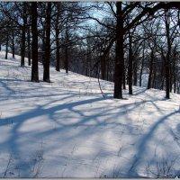 В зимнем лесу :: Андрей Заломленков