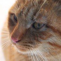 Мои зимние коты :: Galina Belugina