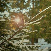 Солнечная зима :: Екатерррина Полунина