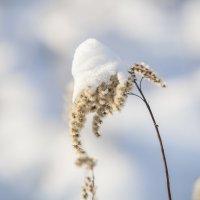 Зимняя нежность :: Андрей Михайлин