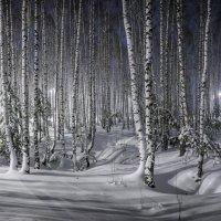 Зимняя сказка :: Алексей Фадеев