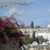 Дорога в Старый город в Иерусалиме :: Надежда