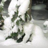 Снежные фантазии: кто-то спрятался под сосенкой :: Наталья Пендюк Пендюк