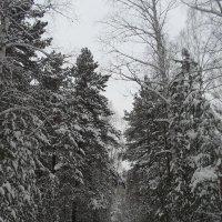Зимняя дорога :: Анатолий