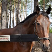 лошадь :: Олег Сливанков