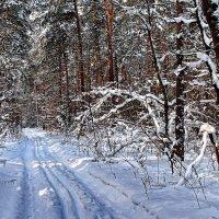 Упруг и звонок след лыжни... :: Лесо-Вед (Баранов)