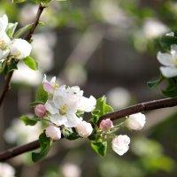 Весна. :: Олег