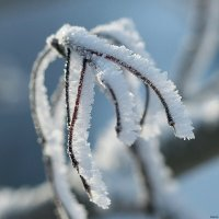 Морозно :: Swetlana V