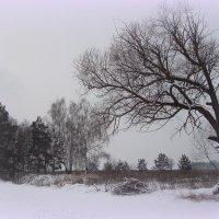 зимний мотив... :: Галина Филоросс