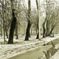 В туманном парке :: Людмила