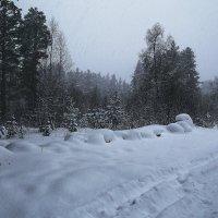Дорога в лесу :: Zifa Dimitrieva