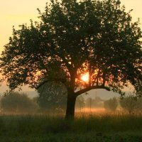 Солнце на веточке :: Юрий. Шмаков