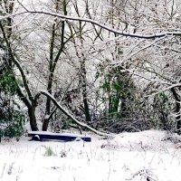 Под деревом, красота... :: Юрий Стародубцев