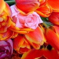 тюльпаны :: djangalina *