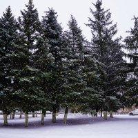 Снегопад :: Владимир Болдырев