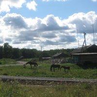 Ходят кони :: Алина Шевелева