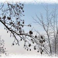 Зимний этюд :: veera (veerra)