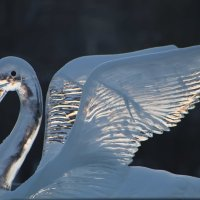 хрустальная лебедь :: Ксения Беляева