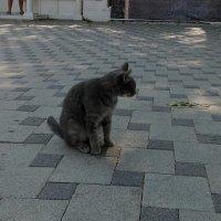 Юг, тротуар, кошка :: Владимир Ростовский