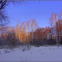 Вечер новогодних каникул :: Владимир Холодный