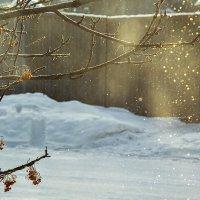 Солнечный дождь :: Андрей Елисеев