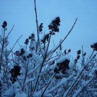 зима пришла неожиданно) :: Oxi --