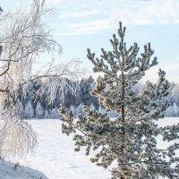 зимняя сказка :: Nadia Brusnikova