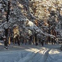 Грустящим ожиданием дороги... :: Лесо-Вед (Баранов)