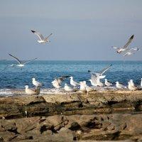 Чайки , утро , море , Израиль ! :: vasya-starik Старик