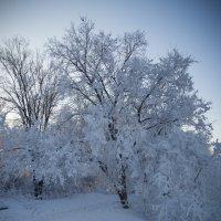 зимняя сказка 02 :: Denis Zakalyapin