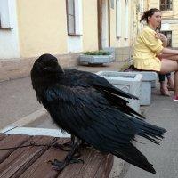 Ворон и его хозяйка :: Александр Рябчиков