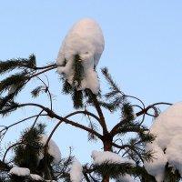 Снеговики на ветках :: Александр Прокудин