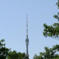 Останкинская Башня :: Олег Савин